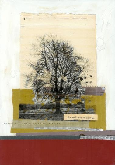 an oak in winter